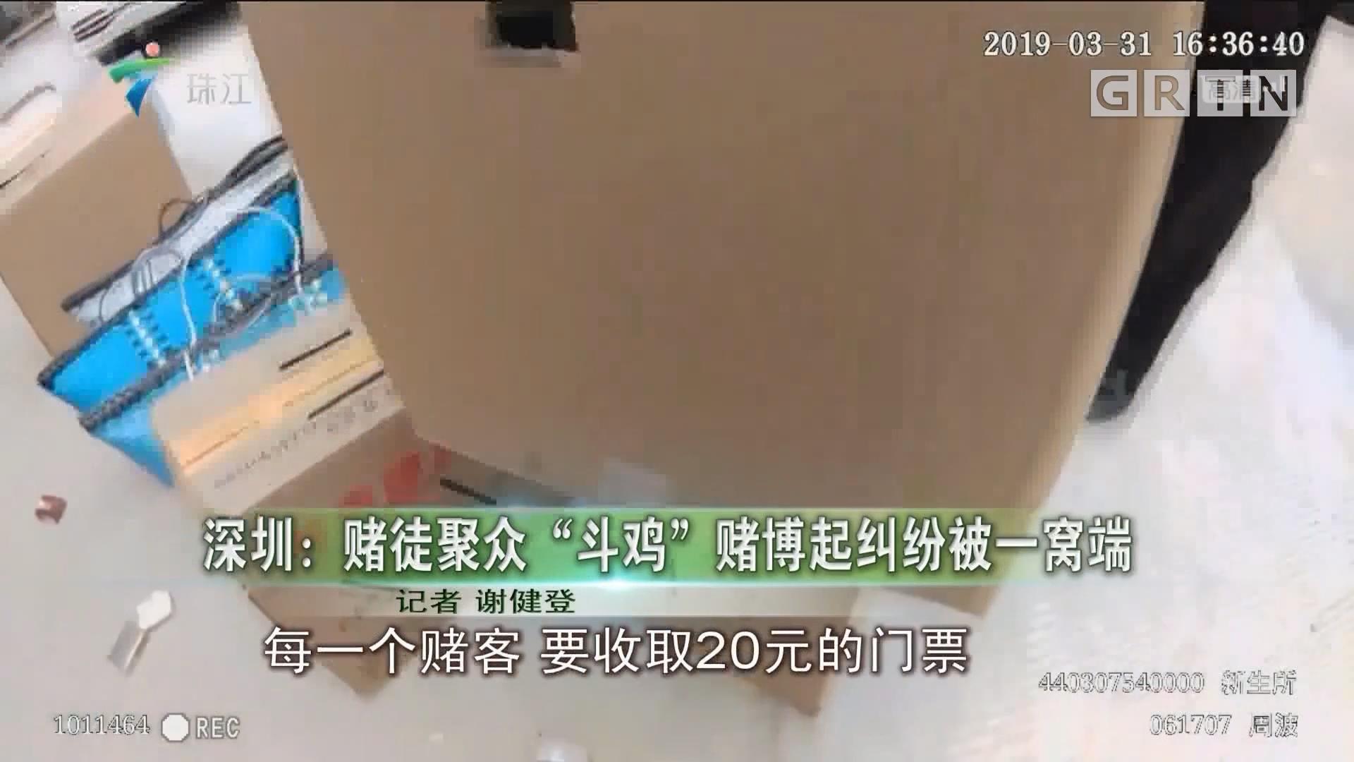 """深圳:赌徒聚众""""斗鸡""""赌博起纠纷被一窝端"""