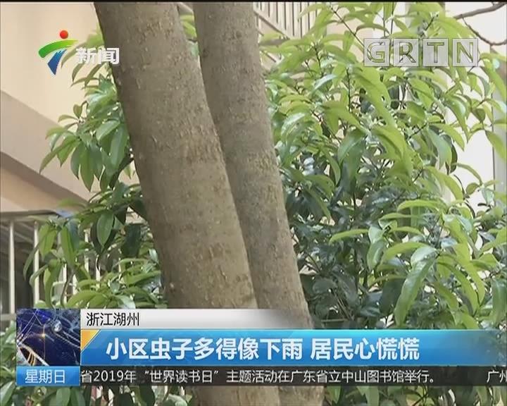 浙江湖州:小区虫子多得像下雨 居民心慌慌