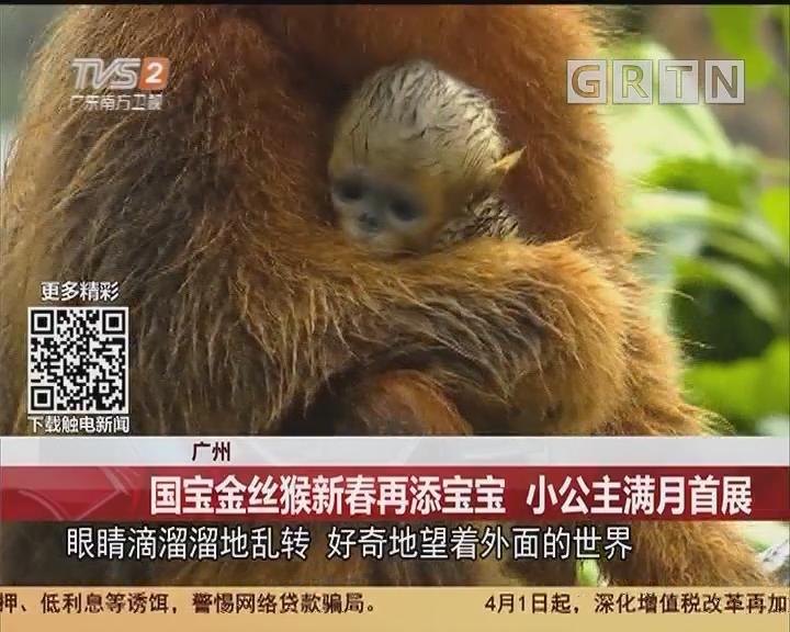 广州:国宝金丝猴新春再添宝宝 小公主满月首展
