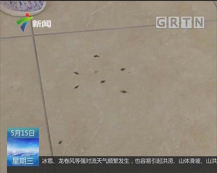 """肇庆:小区有""""毒虫""""?业主担惊受怕"""