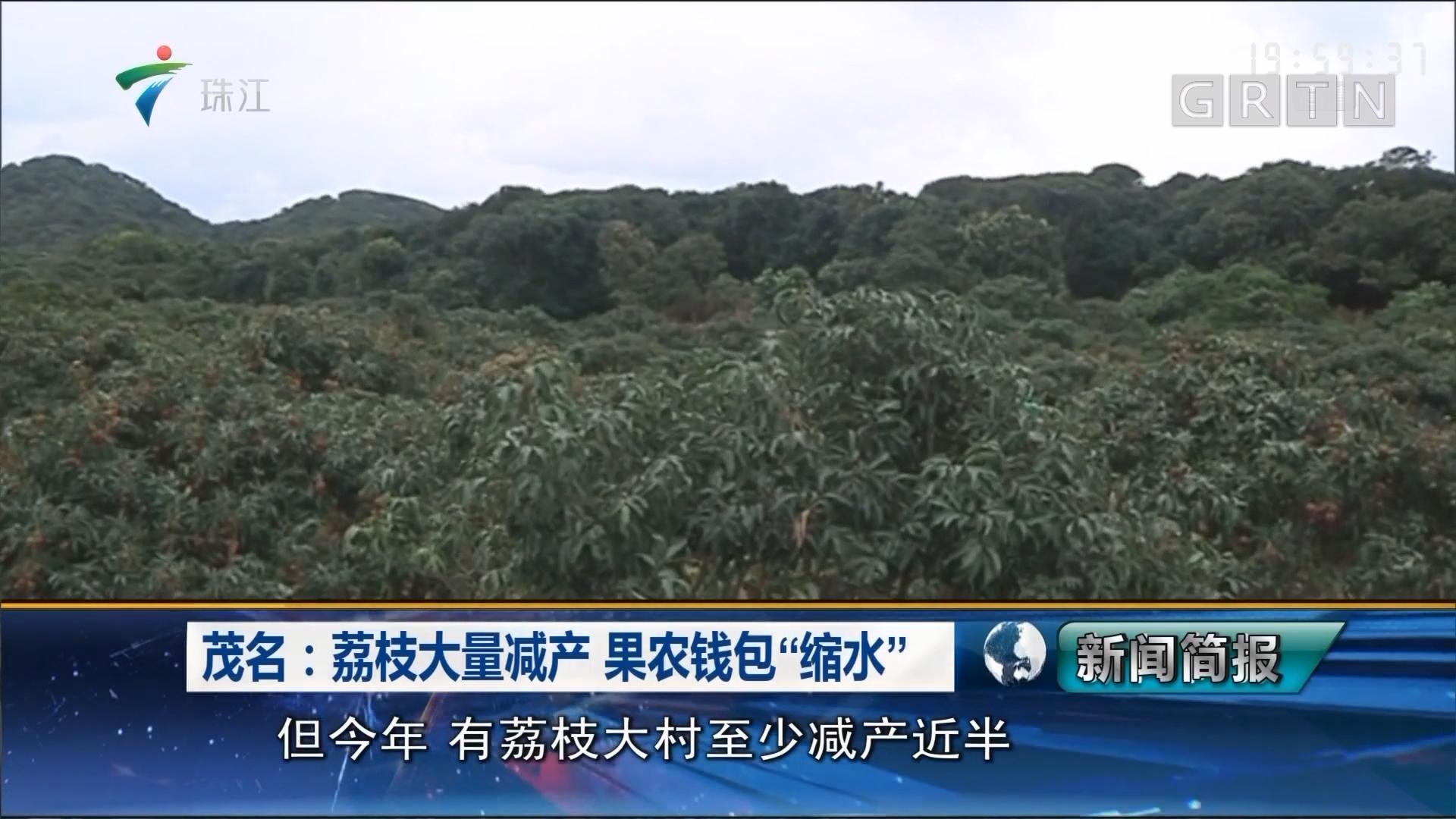 """茂名:荔枝大量减产 果农钱包""""缩水"""""""
