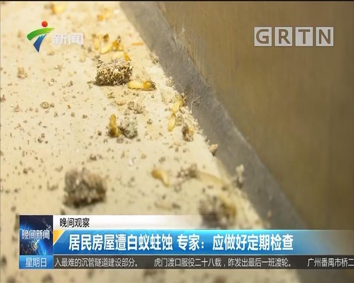 居民房屋遭白蚁蛀蚀 专家:应做好定期检查