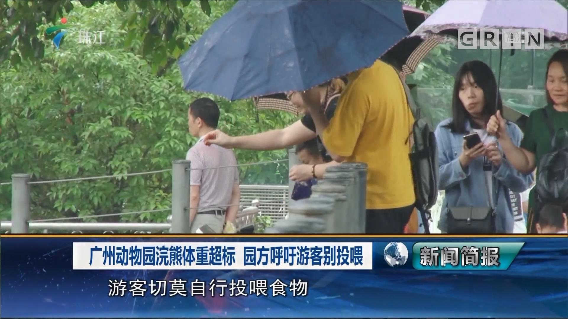 广州动物园浣熊体重超标 园方呼吁游客别投喂