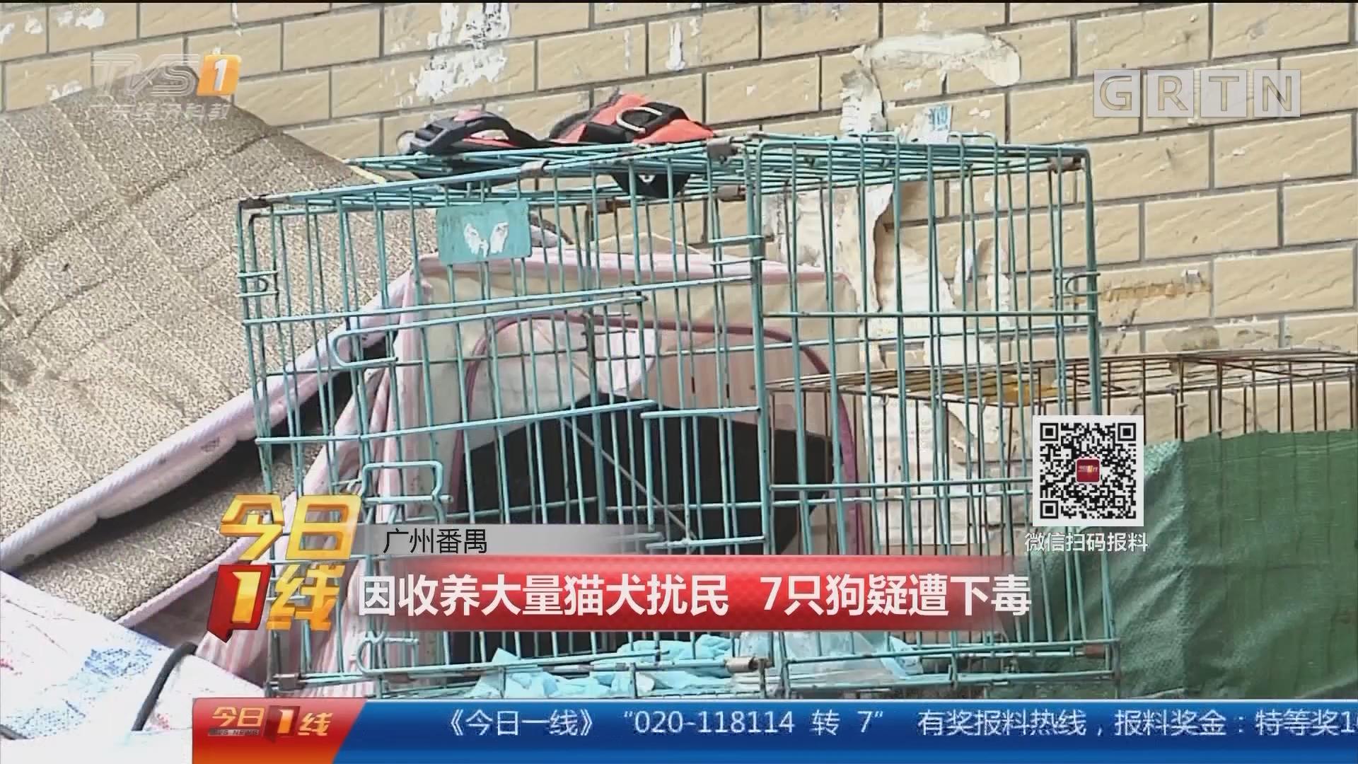 广州番禺:因收养大量猫犬扰民 7只狗疑遭下毒