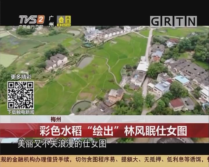 """梅州:彩色水稻""""绘出""""林风眠仕女图"""