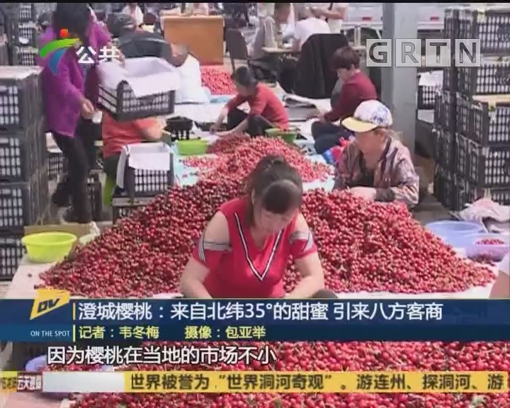 澄城樱桃:来自北纬35°的甜蜜 迎来八方客商