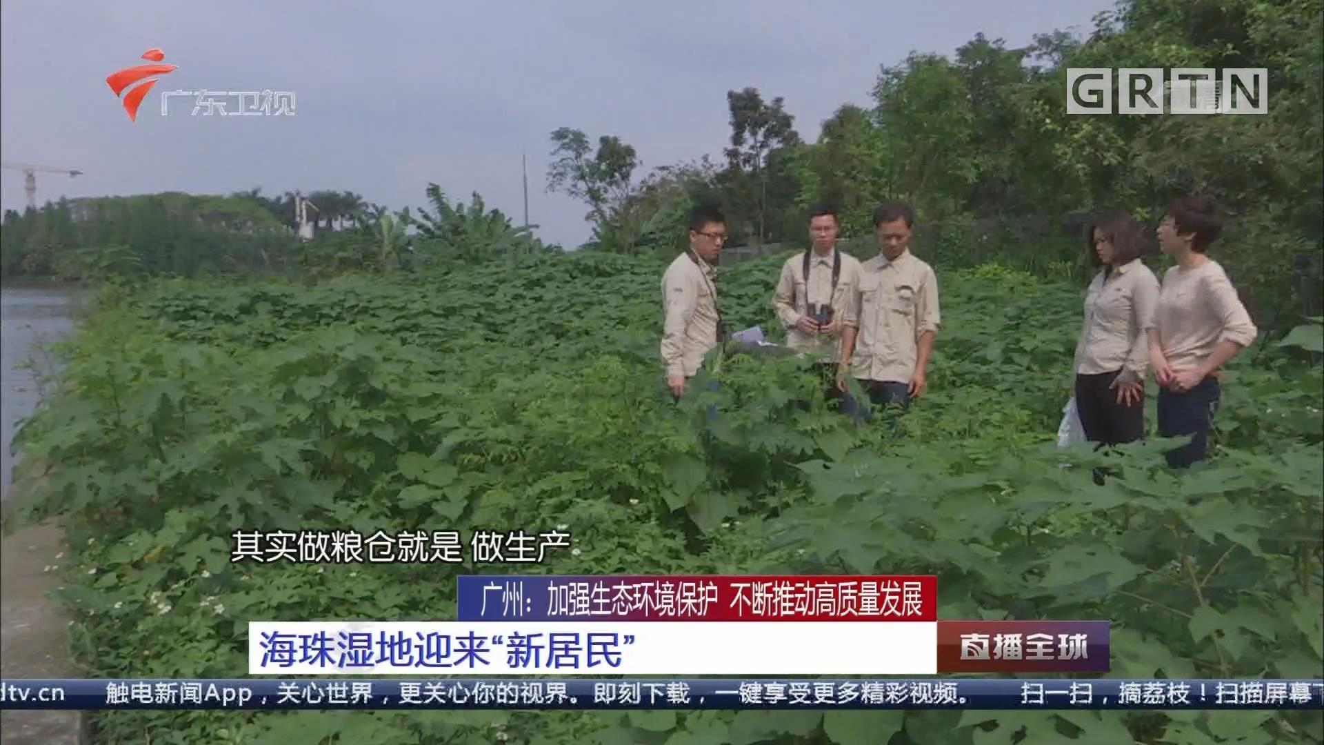 """廣州:加強生態環境保護 不斷推動高質量發展 海珠濕地迎來""""新居民"""""""
