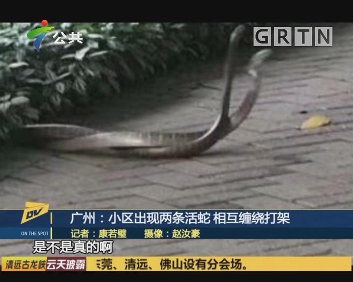 广州:小区出现两条活蛇 相互缠绕打架