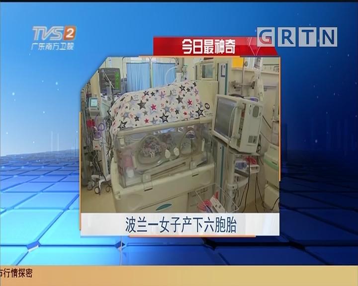 今日最神奇:波兰一女子产下六胞胎
