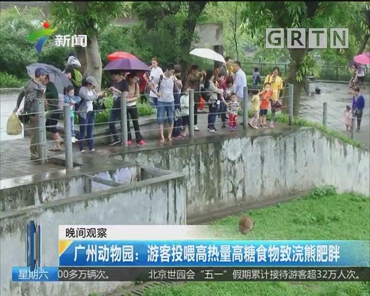广州动物园:游客投喂高热量高糖食物致浣熊肥胖
