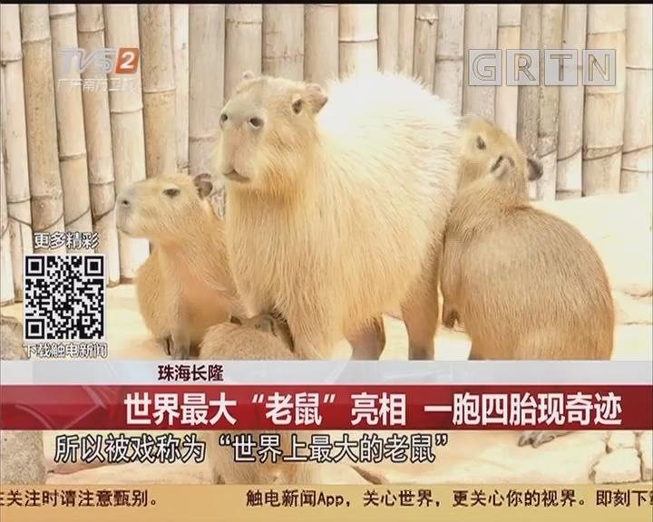 """珠海长隆:世界最大""""老鼠""""亮相 一胞四胎现奇迹"""