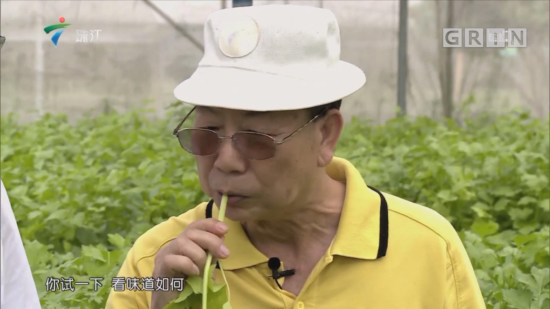 [HD][2019-05-06]摇钱树:维C之王 巴西樱桃