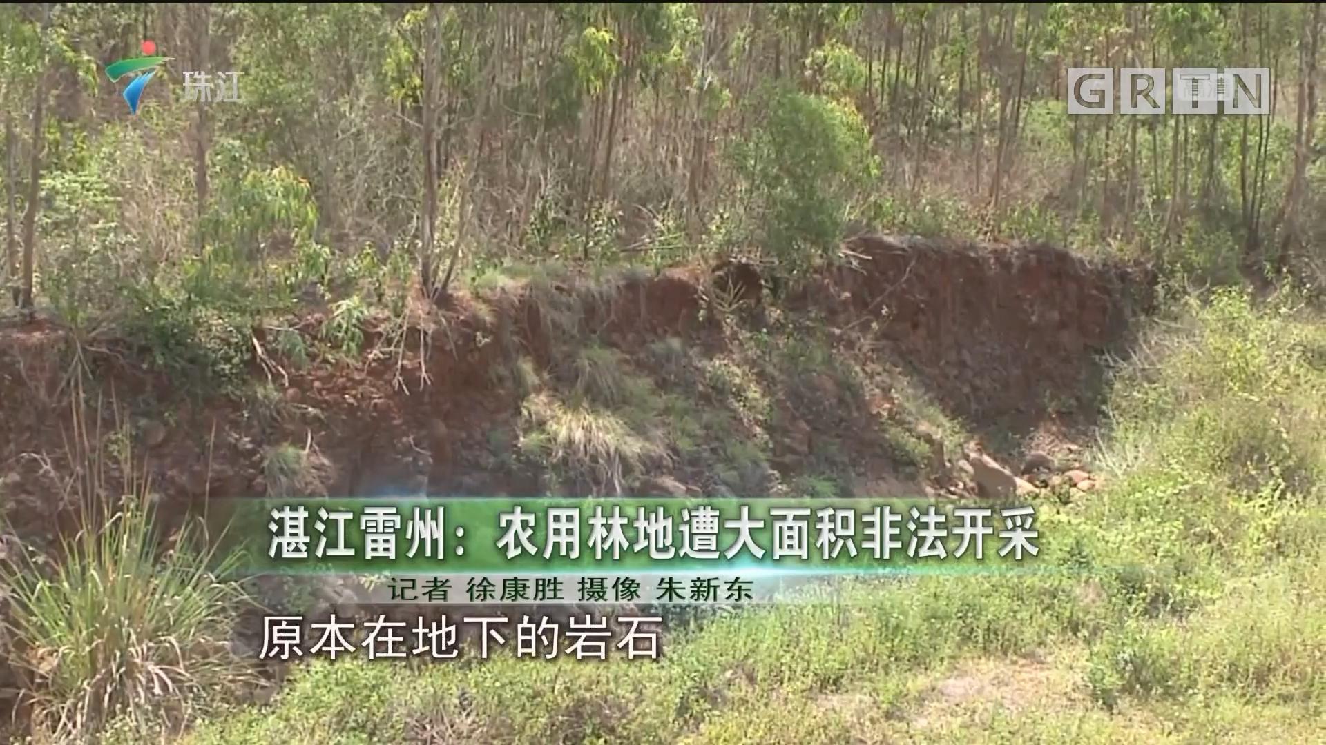 湛江雷州:农用林地遭大面积非法开采