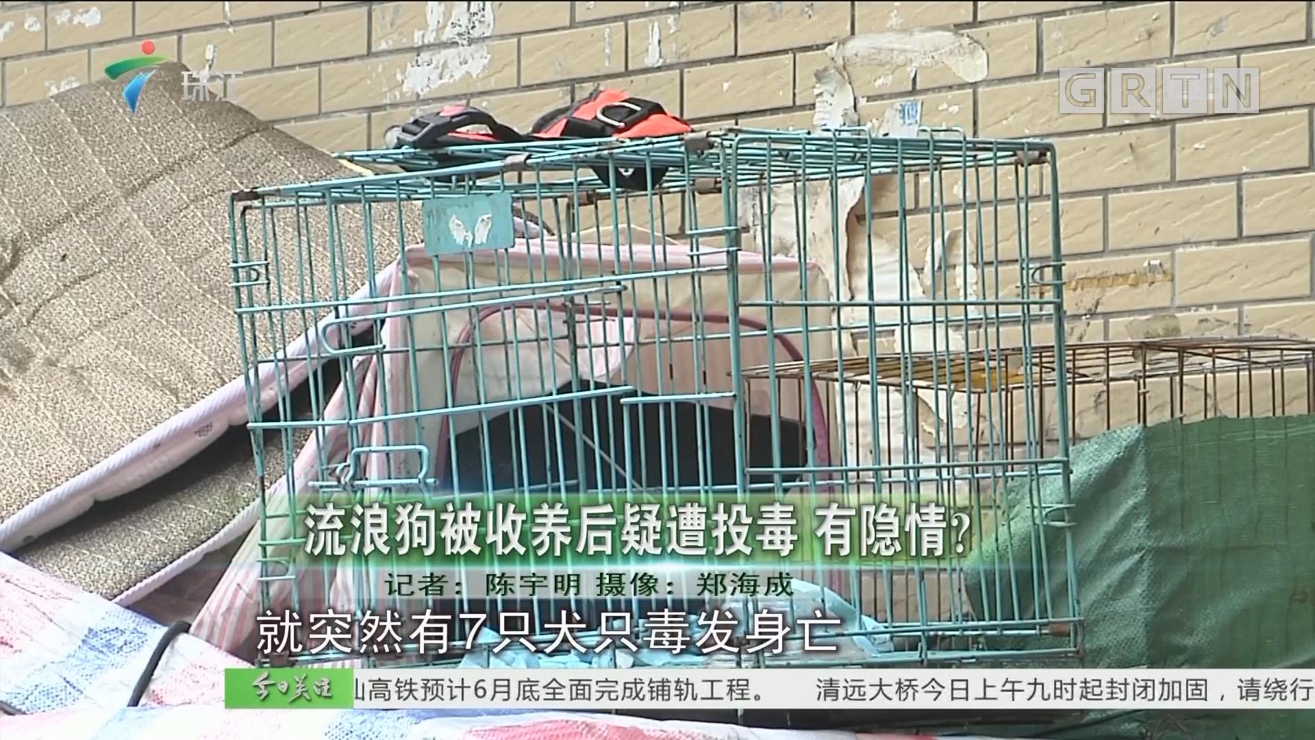 流浪狗被收养后疑遭投毒 有隐情?