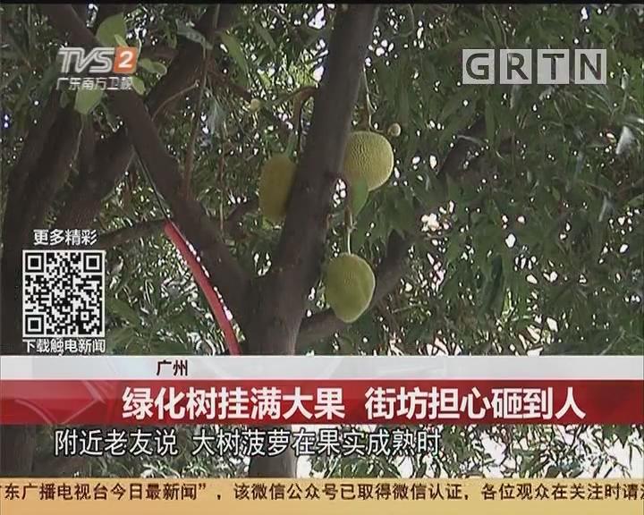 广州:绿化树挂满大果 街坊担心砸到人