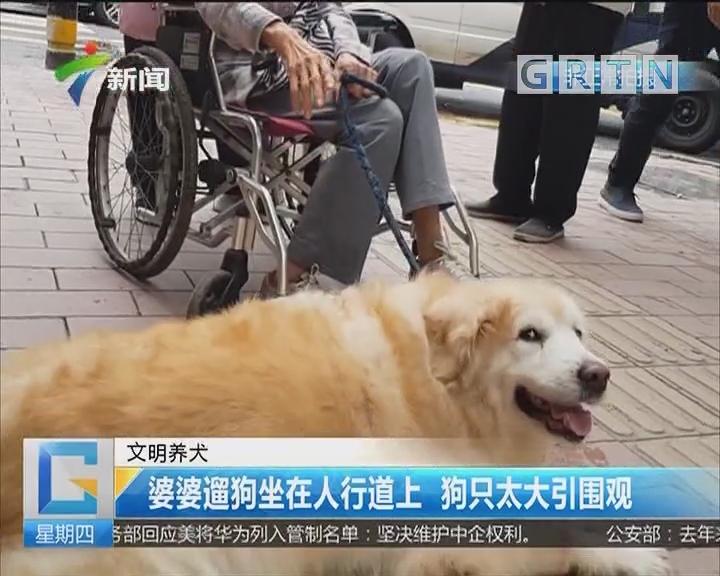 婆婆遛狗坐在人行道上 狗只太大引围观