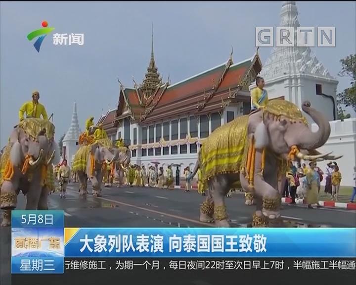 大象列队表演 向泰国国王致敬