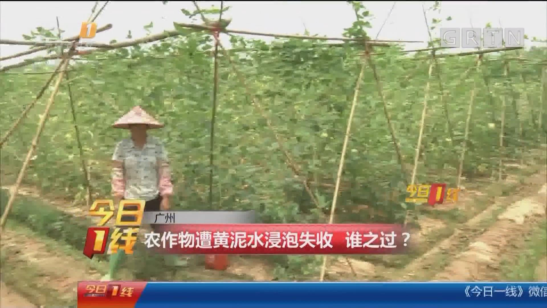 广州:农作物遭黄泥水浸泡失收 谁之过?