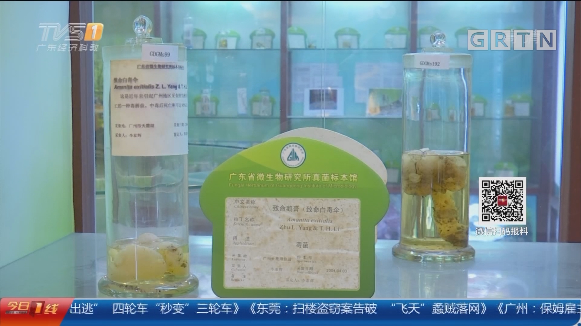 广州从化:采食野生蘑菇 一家三口被放倒