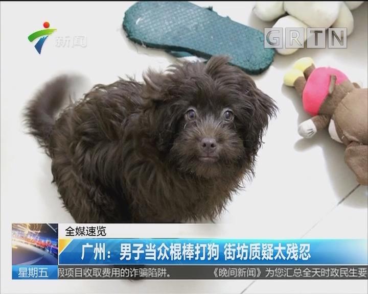 广州:男子当众棍棒打狗 街坊质疑太残忍