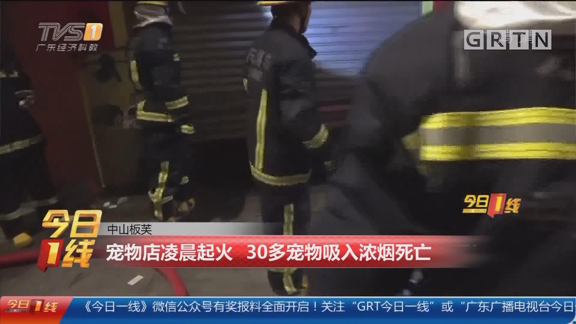 中山板芙:宠物店凌晨起火 30多宠物吸入浓烟死亡