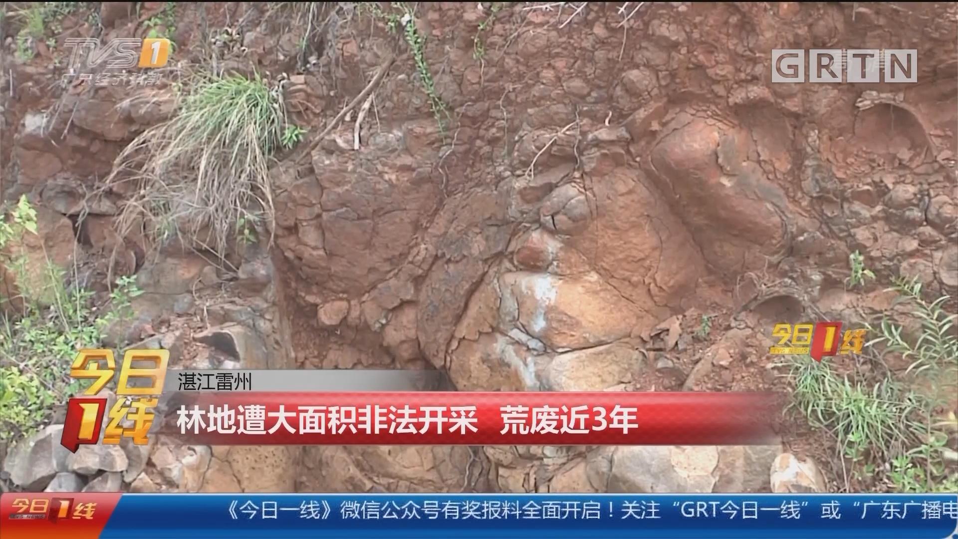 湛江雷州:林地遭大面积非法开采 荒废近3年