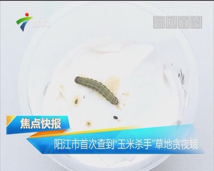 """阳江市首次查到""""玉米杀手""""草地贪夜蛾"""