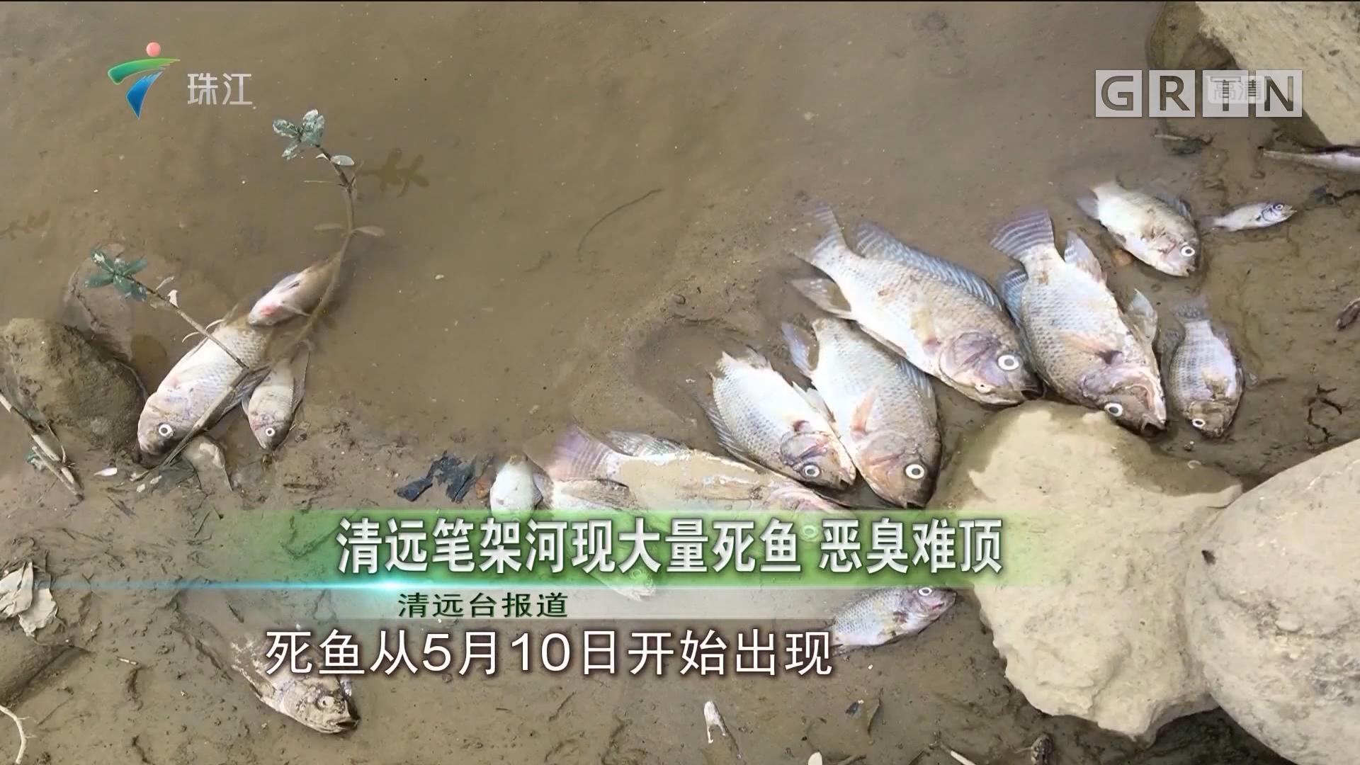 清远笔架河现大量死鱼 恶臭难顶