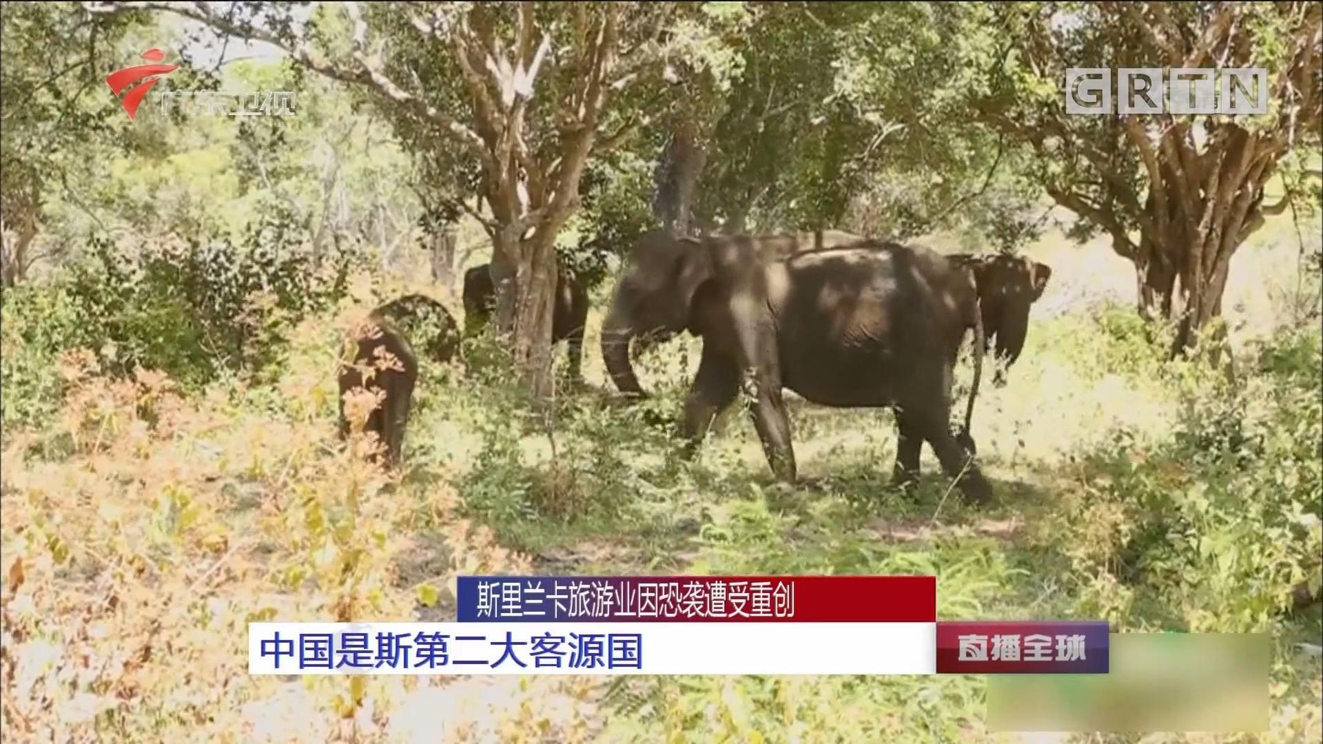 斯里兰卡旅游业因恐袭遭受重创:中国是斯第二大客源国