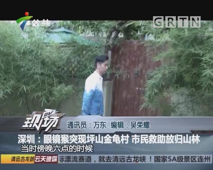 深圳:眼镜猴突现坪山金龟村 市民救助放归山林