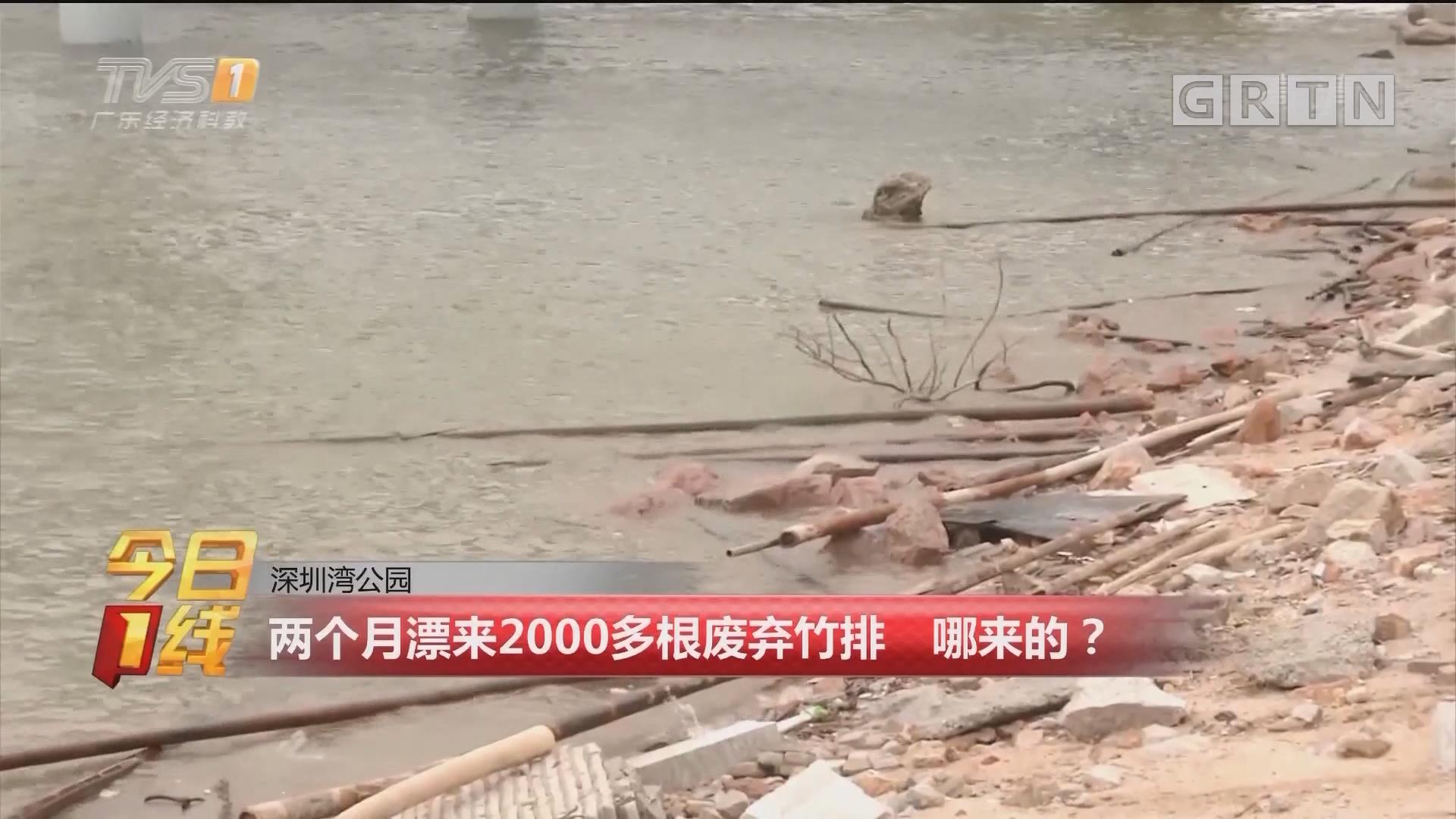 深圳湾公园:两个月漂来2000多根废弃竹排 哪来的?