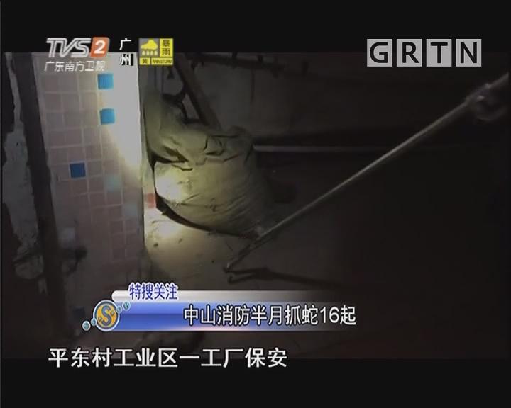 中山消防半月抓蛇16起