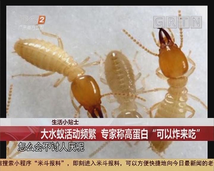 """生活小贴士:大水蚁活动频繁 专家称高蛋白""""可以炸来吃"""""""