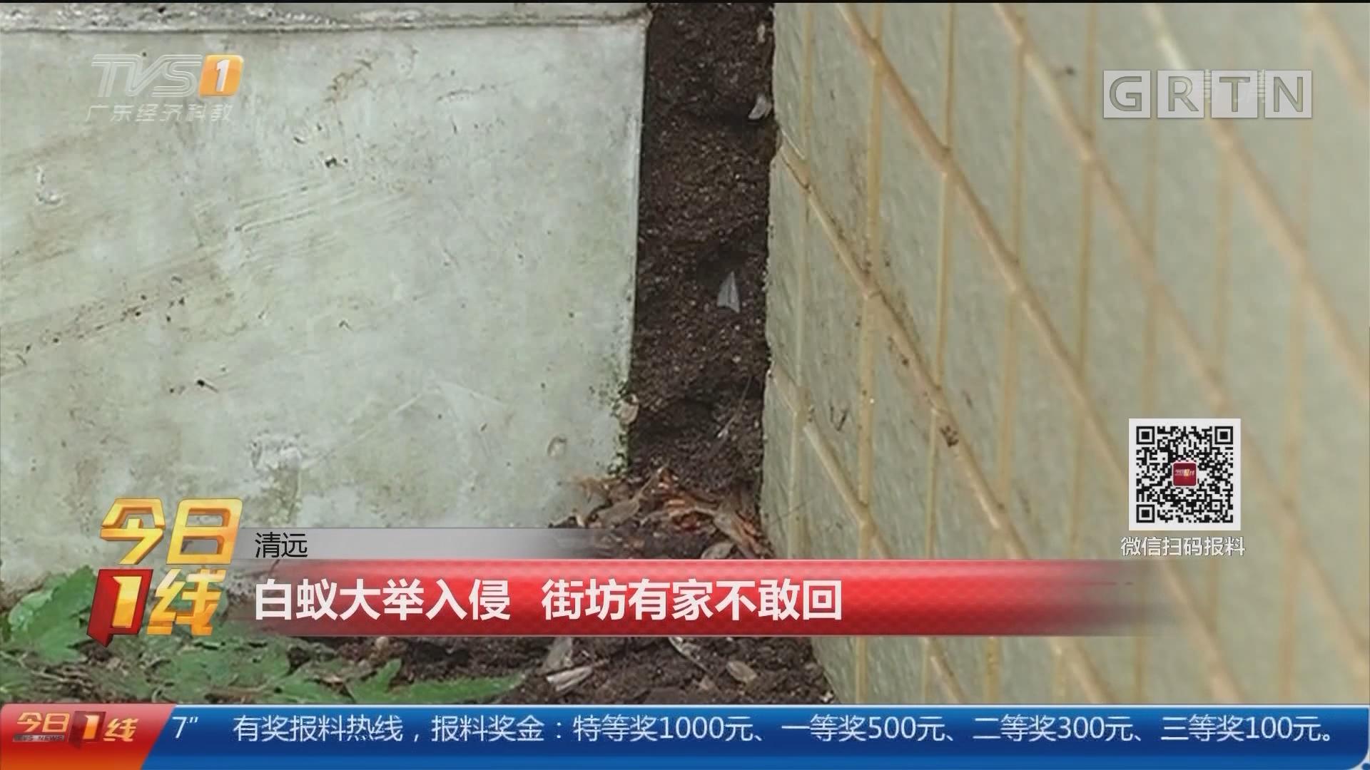 清遠:白蟻大舉入侵 街坊有家不敢回