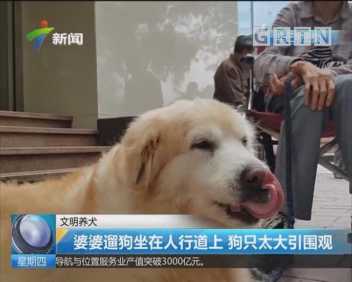 文明养犬:婆婆遛狗坐在人行道上 狗只太大引围观