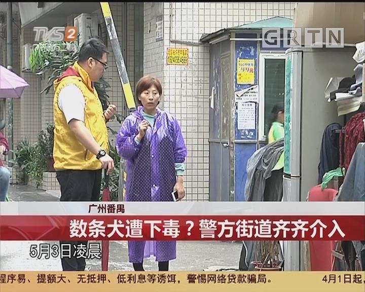 广州番禺:数条犬遭下毒?警方街道齐齐介入