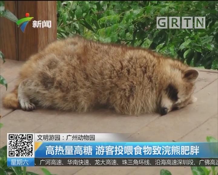 文明游园:广州动物园 高热量高糖 游客投喂食物致浣熊肥胖