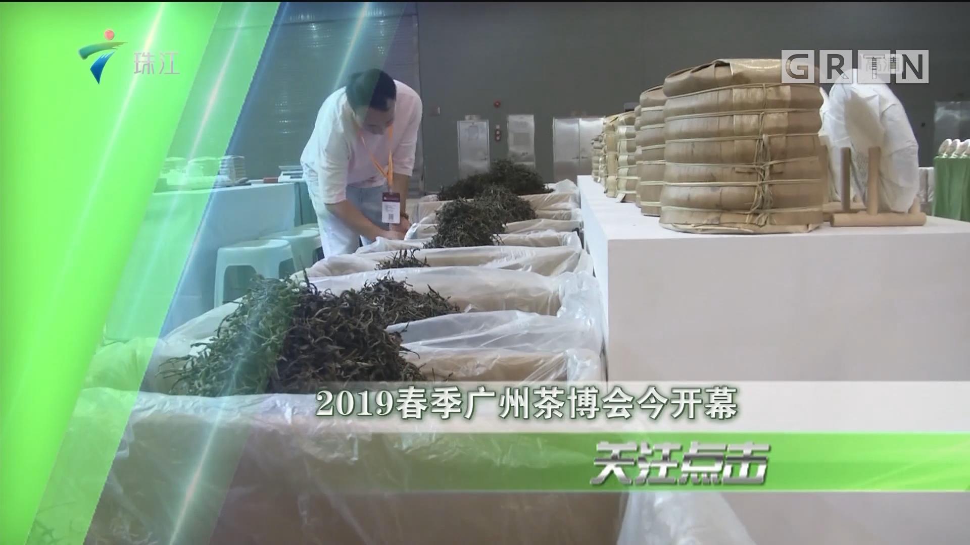 2019春季广州茶博会今开幕