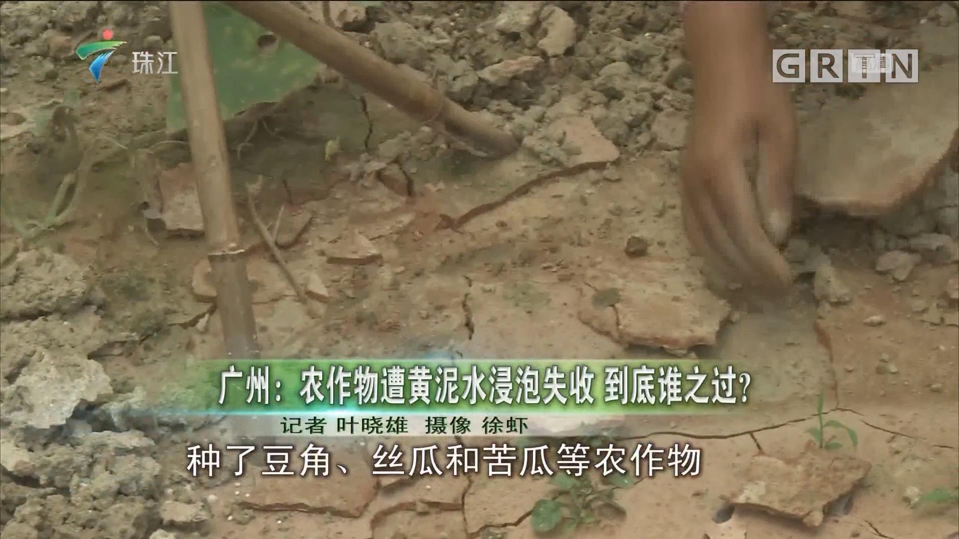 广州:农作物遭黄泥水浸泡失收 到底谁之过?