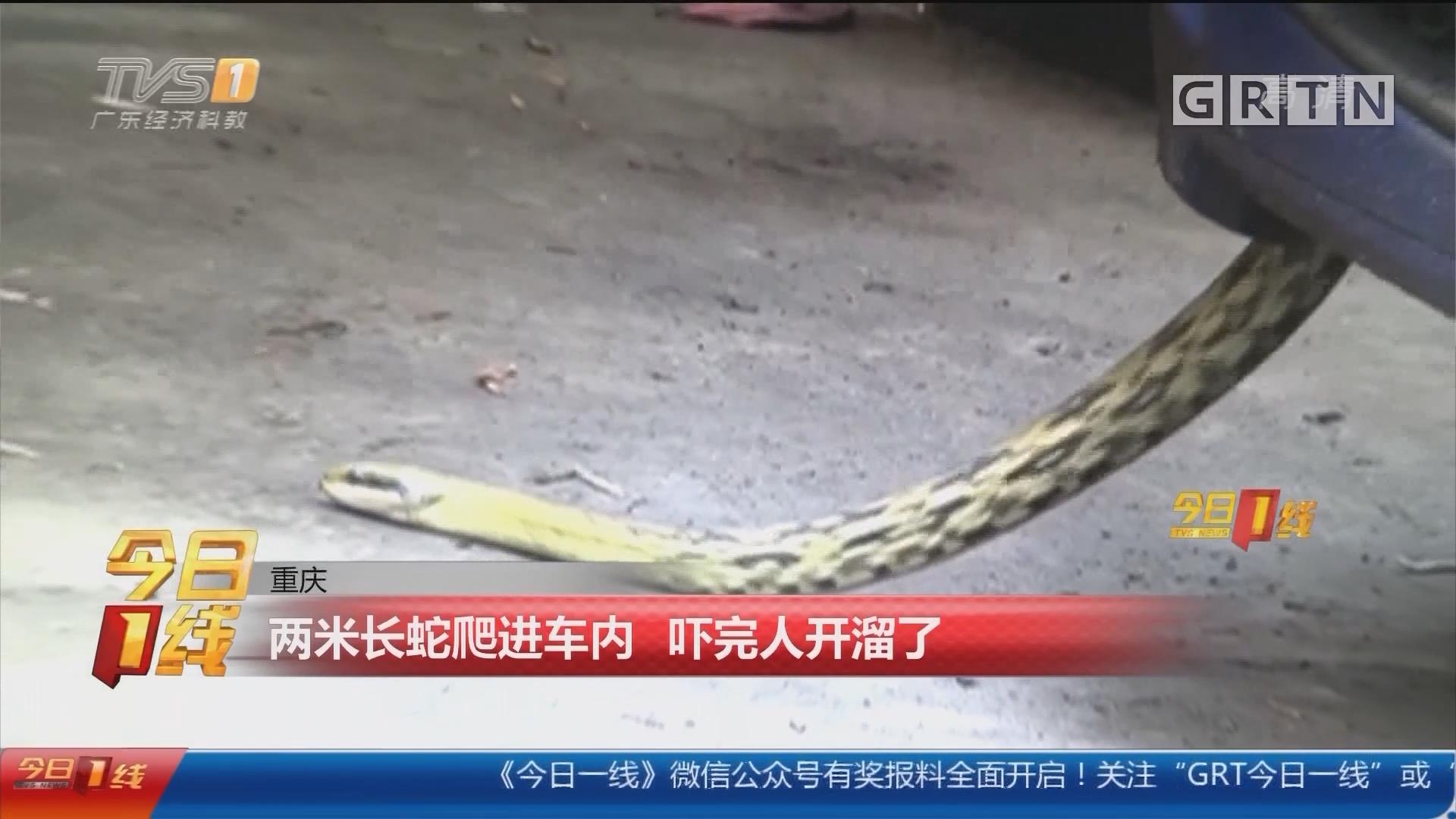 重庆:两米长蛇爬进车内 吓完人开溜了