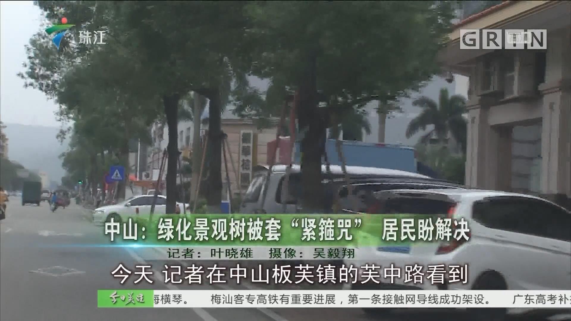 """中山:绿化景观树被套""""紧箍咒"""" 居民盼解决"""