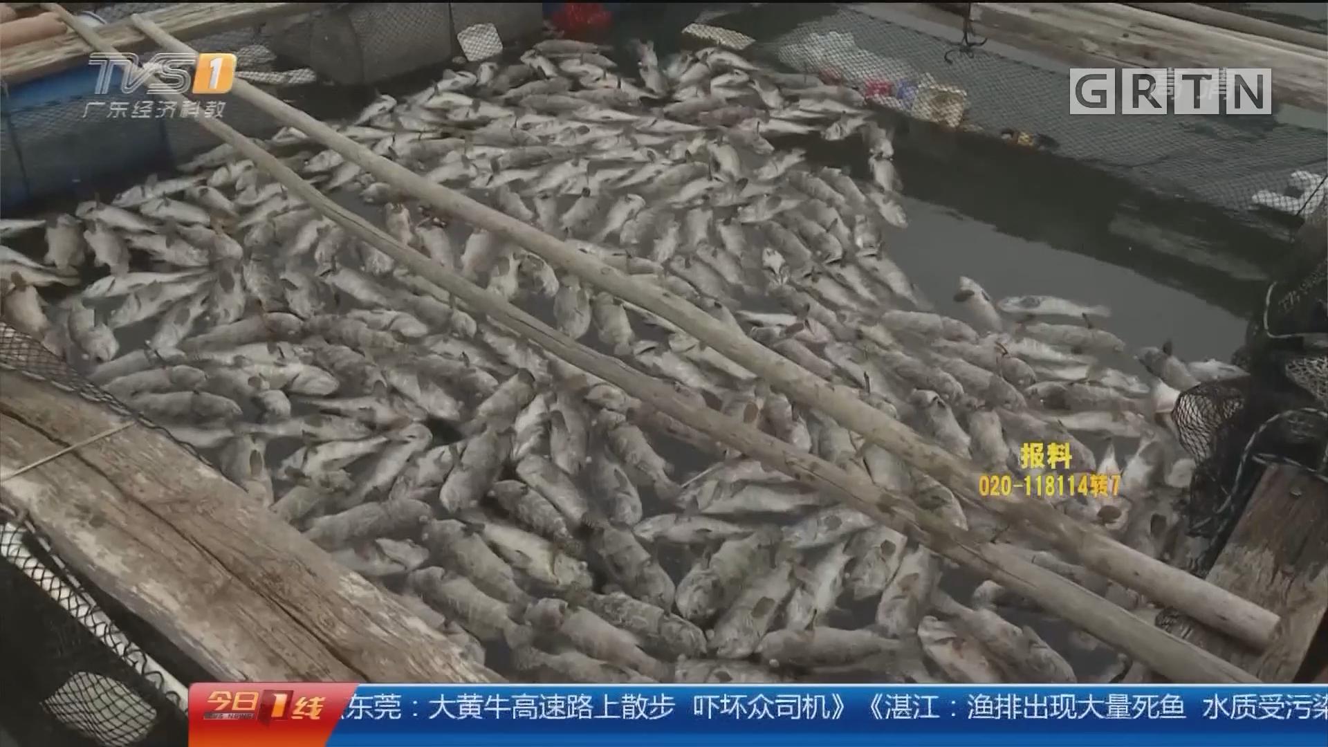 湛江雷州:渔排出现大量死鱼 环保部门抽水样检查