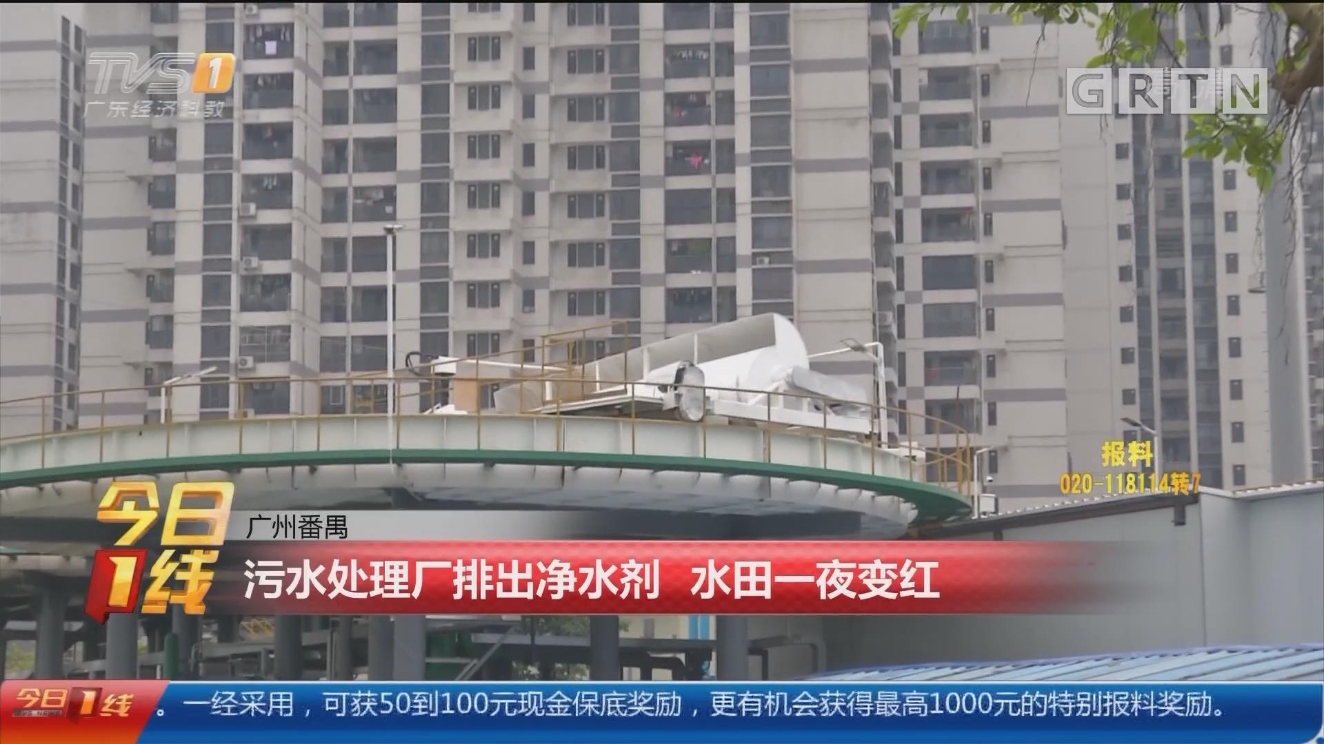 广州番禺:污水处理厂排出净水剂 水田一夜变红