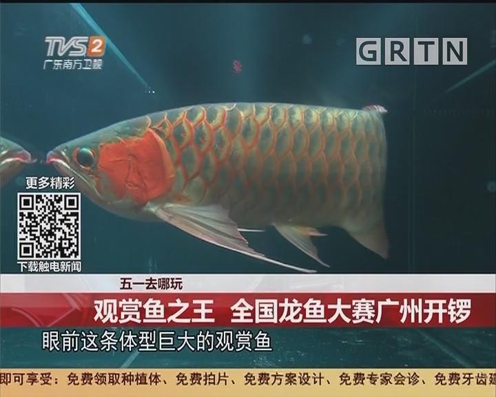 五一去哪玩:观赏鱼之王 全国龙鱼大赛广州开锣