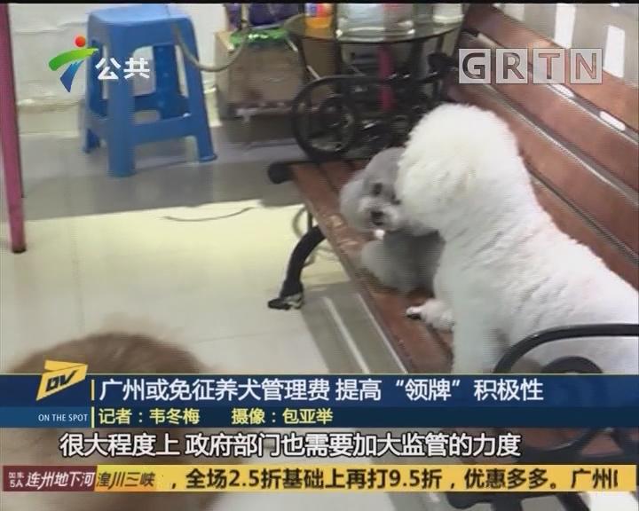 """广州或免征养犬管理费 提高""""领牌""""积极性"""