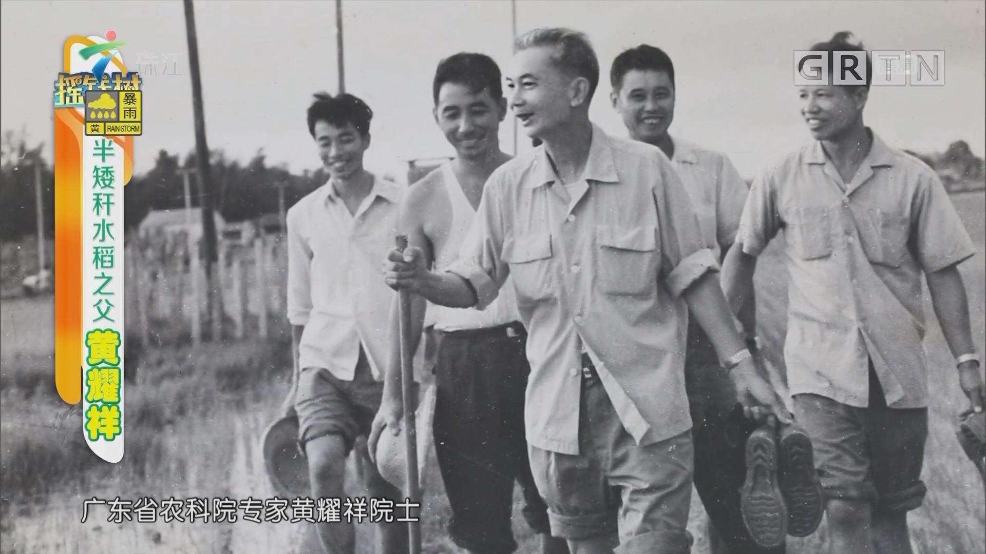 [HD][2019-06-24]摇钱树:半矮杆水稻之父黄耀祥