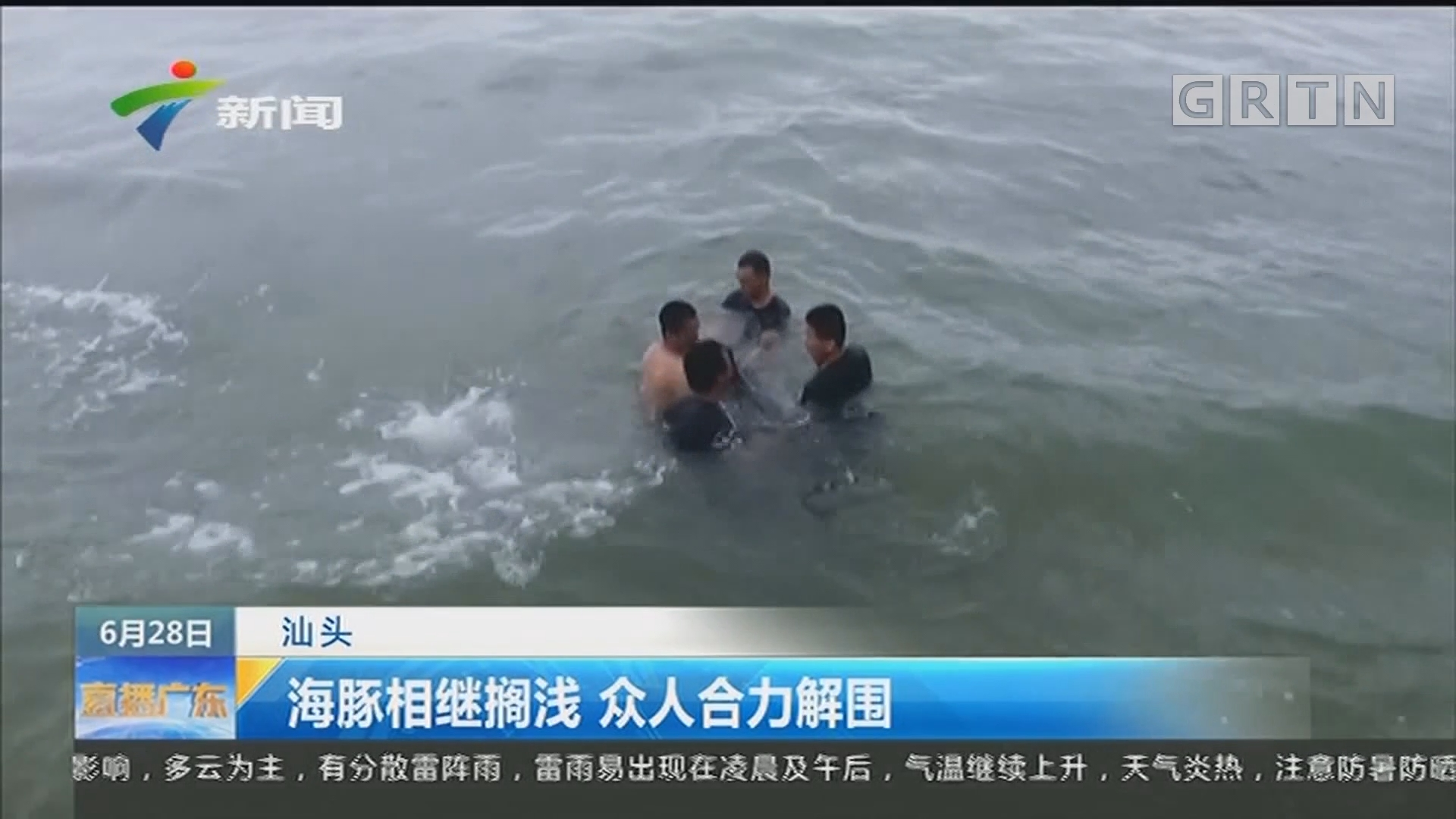 汕头:海豚相继搁浅 众人合力解围