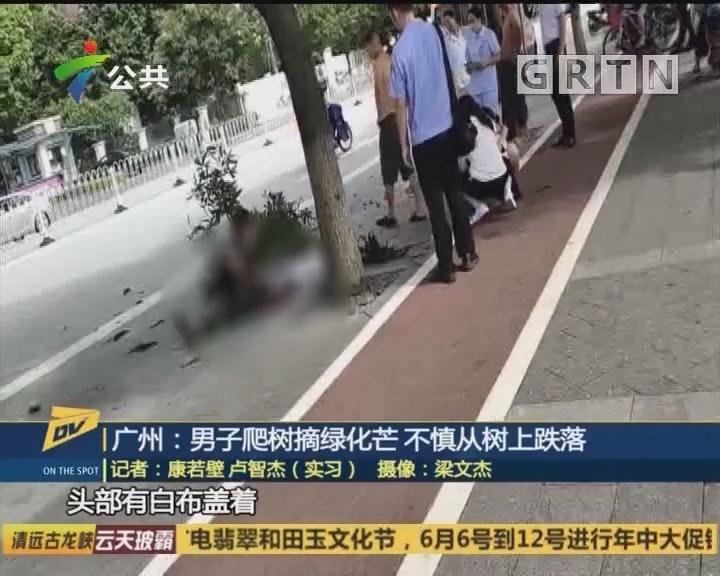 广州:男子爬树摘绿化芒 不慎从树上跌落