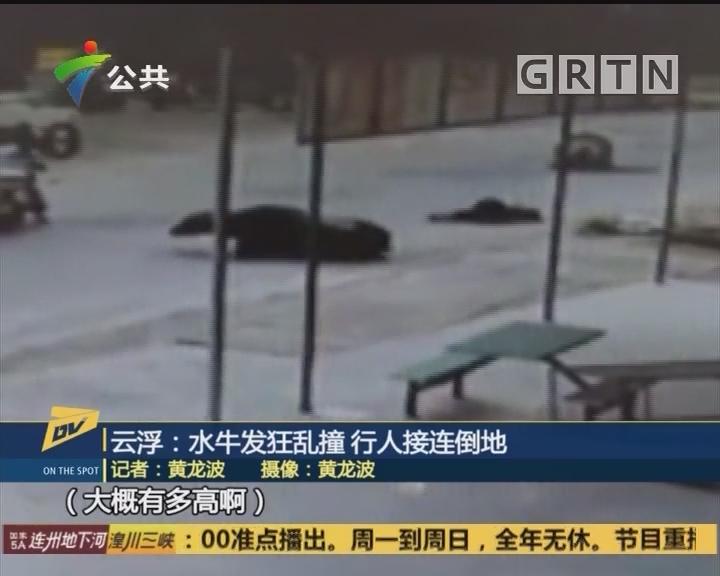 云浮:水牛发狂乱撞 行人接连倒地