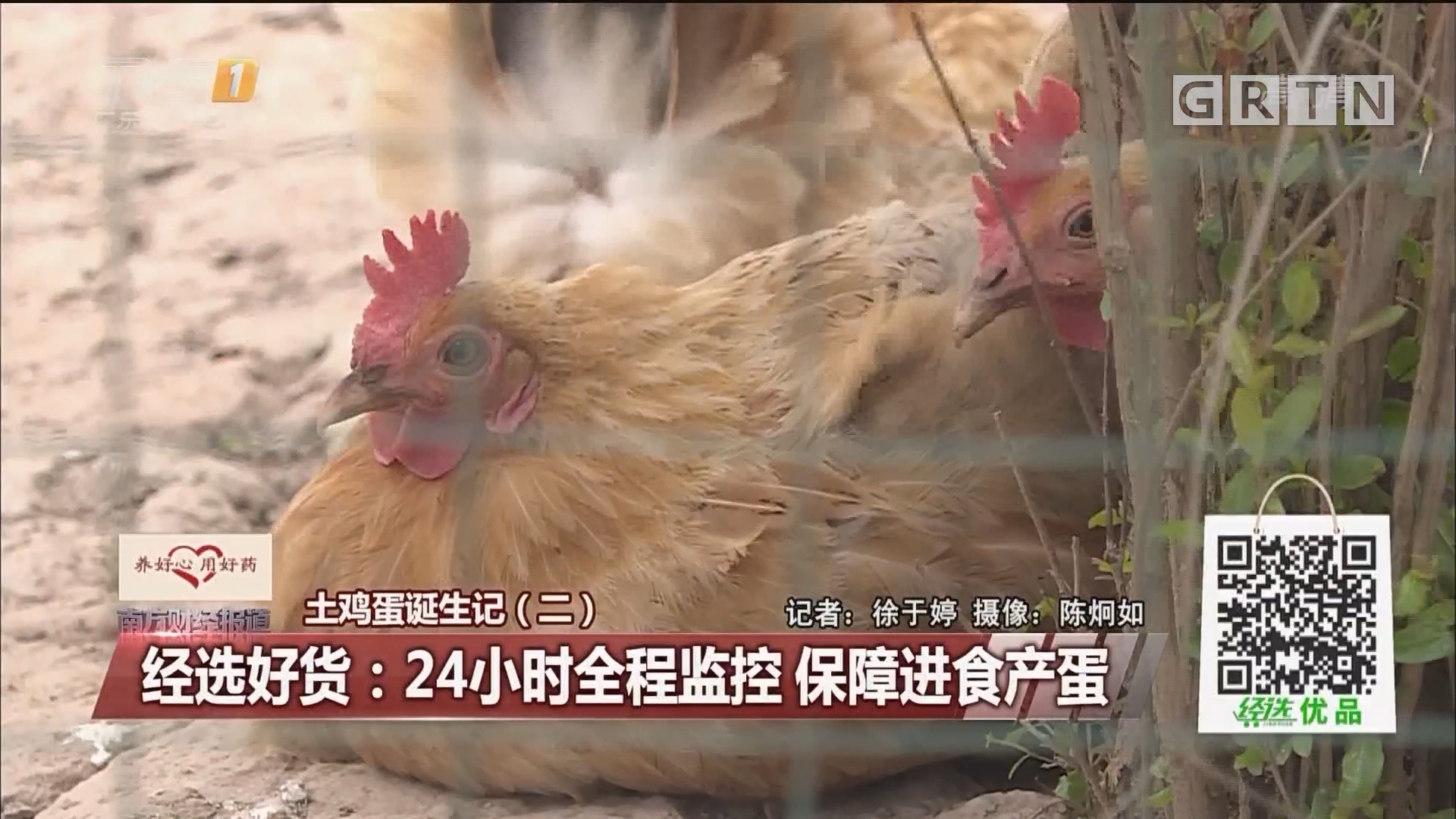 土鸡蛋诞生记(二) 经选好货:24小时全程监控 保障进食产蛋